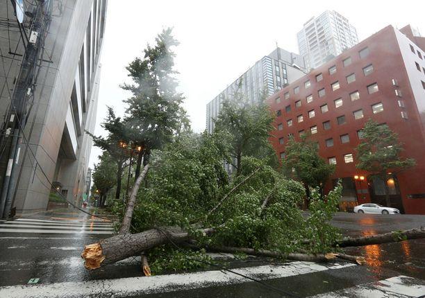 Puu kaatui keskelle risteystä.