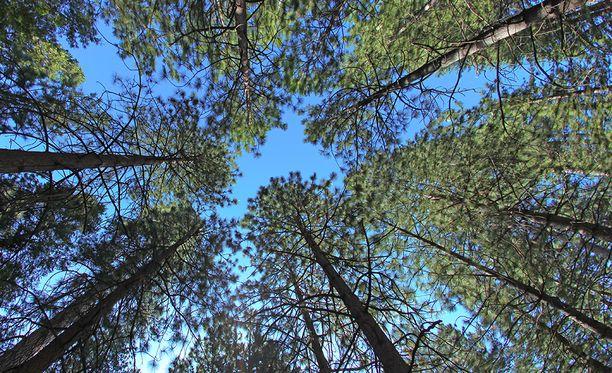 Puut kasvavat nopeammin, kun ilmakehässä on enemmän hiilidioksidia.