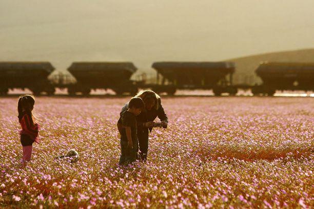 Upea kukinta on innostanut monia ihmettelemään aavikon muodonmuutosta.