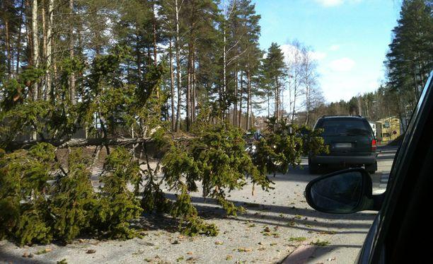 Puu kaatui keskelle autotietä Lohjan lähistöllä puolenpäivän aikaan.