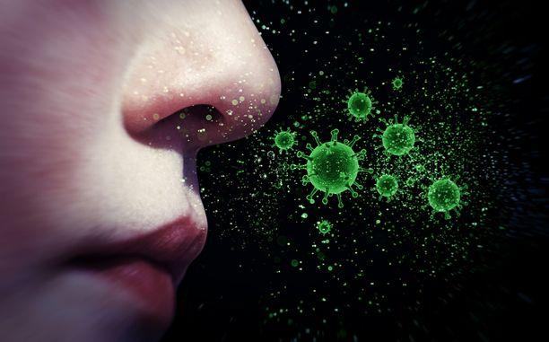 Vielä ei tiedetä, mikä on se mekanismi, jolla koronavirus voi heikentää haju- ja makuaistin.