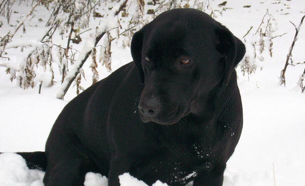 Poliisi vei turvaan raisiolaistalon pihalta löytyneen nääntyneen koiran. Kuvan koira ei liity tapaukseen.