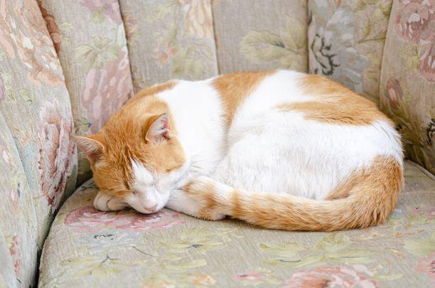 Häntä kiertyneenä kehon ympärille tarkoittaa, että kissa haluaa rentoutua mieluiten omassa rauhassaan.