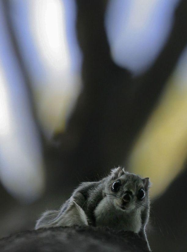 WWF:n mukaan testikuvauksissa liito-oravat ovat näyttäytyneet säännöllisesti.