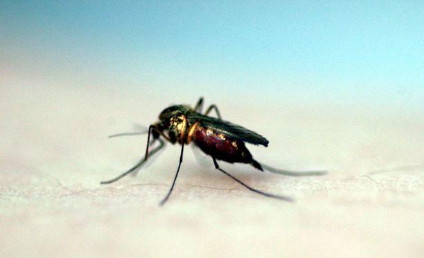 Suurin osa jänisruttotartunnoista tapahtuu hyönteisen pistosta.