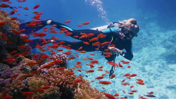 Sukelluslomat ovat suosiossa. Sukeltajat suuntaavat esimerkiksi Thaimaahan, Meksikoon ja Malediiveille.