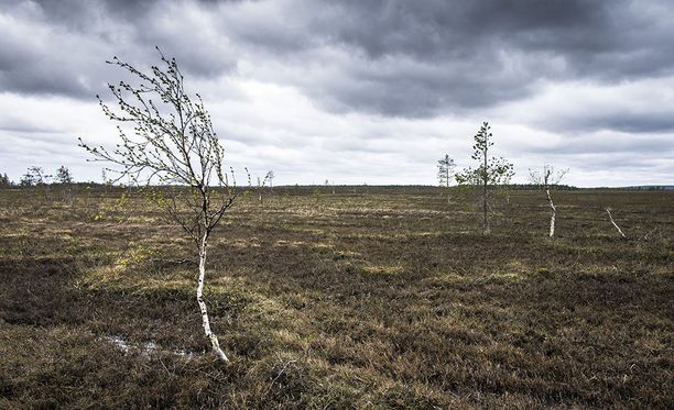 Viiankiaapa on soidensuojelualue, jossa elää useita uhanalaisia kasvi- ja lintulajeja. Alueella on myös merkittävä malmiesiintymä.