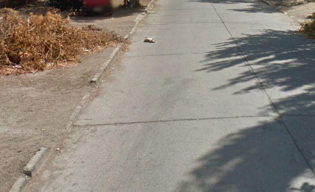 Sarjan viimeinen kuva antaa toivoa koiran pelastumisesta, sillä hauva näyttää kääntyneen tiellä. Tämä saattaa kuitenkin johtua esimerkiksi ilmavirrasta tai törmäyksen aiheuttamasta töytäisystä.