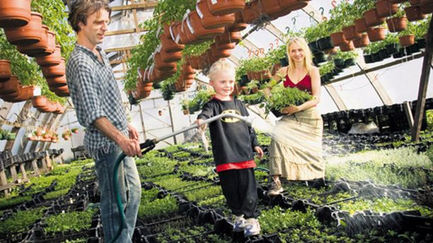 Jukka ja Katja Juhola viljelevät yrttitaimia luonnonmukaisin menetelmin. Viktor-poika on istuttanut itselleen muun muassa intiaanimaissia.