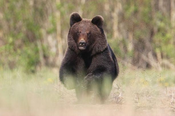 Karhu Espoossa