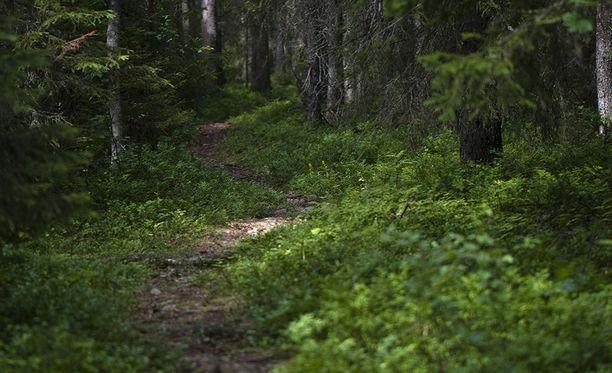 Oulun poliisi kertoo löytäneensä kaikki viime viikolla kadonneet hillastajat.