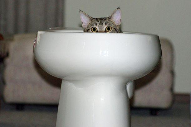 John Banasin kissa kylpi vessassa.