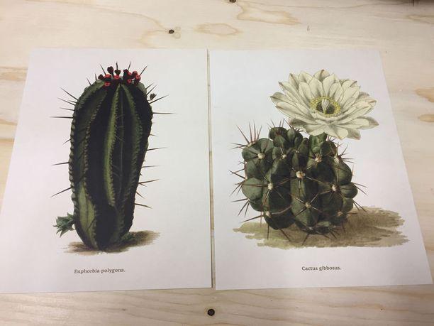 Kaktusta näkyy nyt niin kasvina kuin sisustustavaroissakin.