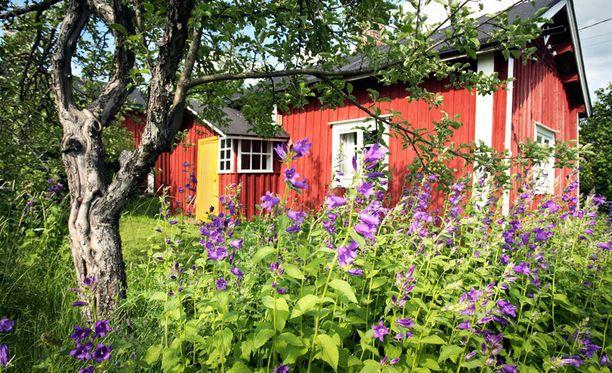 Kotipiha saa nyt kukoistaa rehevänä.