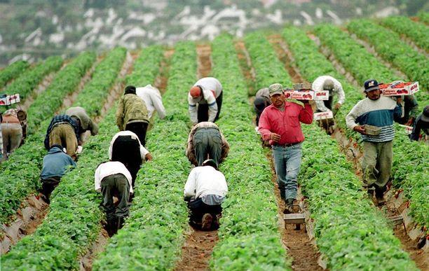 Yhdysvalloissa työskentelee esimerkiksi maataloudessa runsaasti ulkomailta muuttaneita ihmisiä.