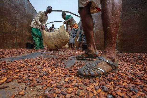 Köyhyys on suurimpia syitä sille, että paikalliset viljelijät kokevat paineita laajentaa toimintaansa suojelualueille. Norsunluurannikolla kaakaonviljelijä tienaa 42 senttiä, Ghanassa 71 senttiä päivässä.