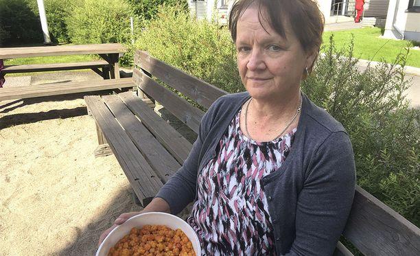 Ikänsä hillasoilla kulkenut pudasjärveläinen Marja-Leena Turves on kohdannut soilla myös marjoihin liittyvää kateutta ja raivoa.