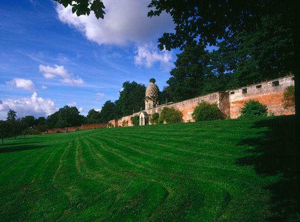 Jättiananas näkyy hyvin puutarhan muurien yli.