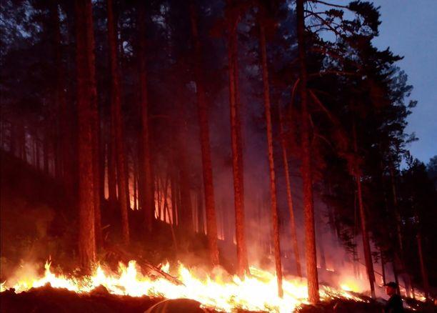 Siperiassa riehuvat palot ovat tuhonneet lähes 50 000 hehtaaria metsää.