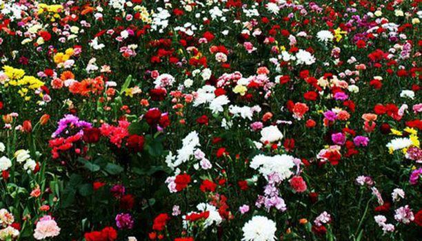 Nähdäänkö Tampereella tällainen kukkaketo ensi kesänä