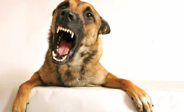 Vuokralaisen koirat aiheuttavat ongelmia.