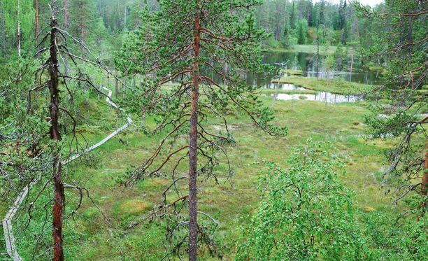 Oulangan kansallispuistossa voi reippailla läpi vuoden.