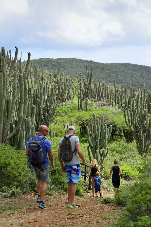 Arikokin luonnonpuistossa saaren sisäosassa on paljon opastettuja patikointireittejä.