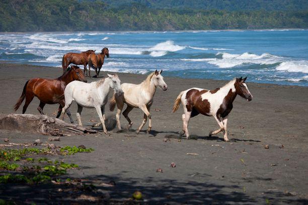 Playa Negra, Costa Rica: Tämä musta ja suojaisa ranta on niin perheiden kuin surffareidenkin suosiossa.