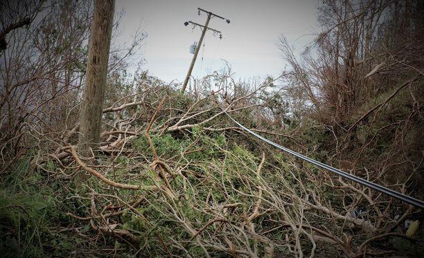 Vikapalvelunumeroon 0800 90440 kannattaa soittaa vain, jos tietää vian aiheuttajan, joka voi olla esimerkiksi sähkölinjaan nojaava puu. Kuvituskuva.