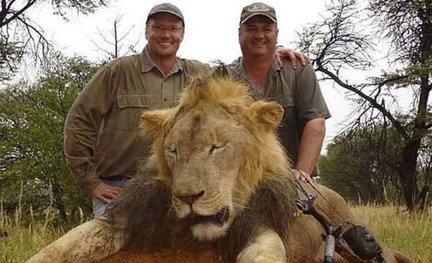 Walter Palmer (vas.) poseeraa ampumansa leijonan (ei Cecil) kanssa.