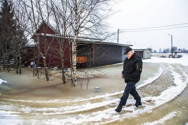 Kokemäenjoki tulvii, Huittisissa on rakennuksia vaarassa. Tuomo Takala ei pyydä apua.