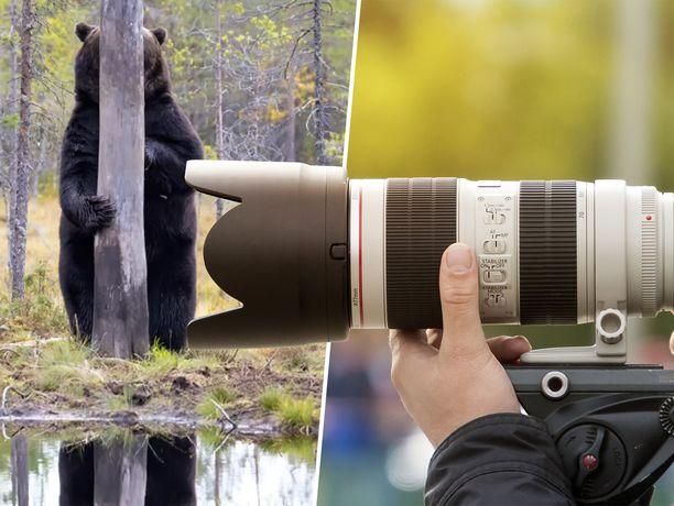 Suomalainen karhukuva pääsi kansainväliseen hauskojen eläinkuvien finaalisarjaan.