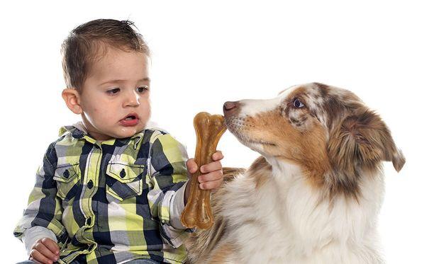 Koiranomistajilla on vaikeuksia erottaa, onko koira hermostunut vai rento vauvan seurassa.