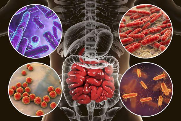 Aiemmista tutkimuksista tiedetään, että suolistomikrobiston epätasapaino voi johtaa matala-asteiseen tulehdustilaan, joka myötävaikuttaa rasvamaksan syntyyn.