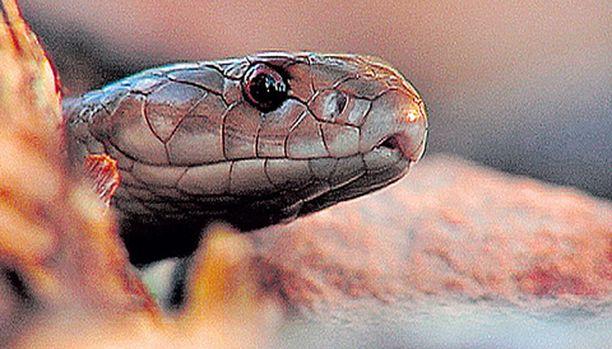 """Käärmeistä kehrätään jännitystä tahattoman koomisessa """"dokumentissa""""."""