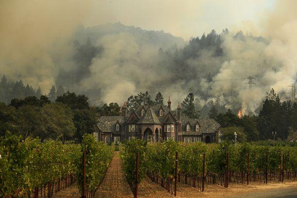 Tuli on tuhonnut toistakymmentä viinitilaa.