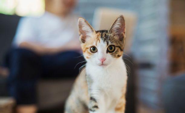 Kuvituskuva. Kuvan kissa ei liity tapaukseen.