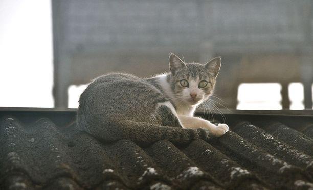 Kuvituskuvan kissa ei liity tapaukseen.