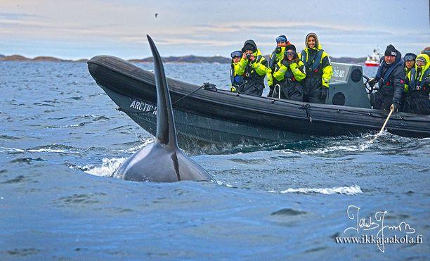 Innokkaat turistit menevät liian lähelle valaita.