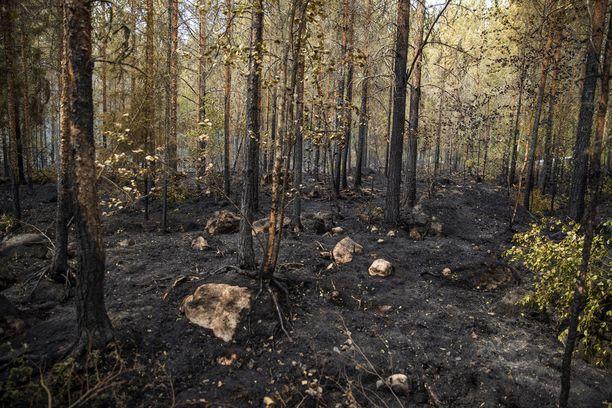 Metsää on palanut alueella runsaasti.