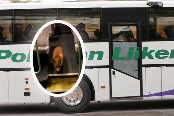 Repolainen piipahti Pohjolan Liikenteen linja-autossa Kirkkonummella.