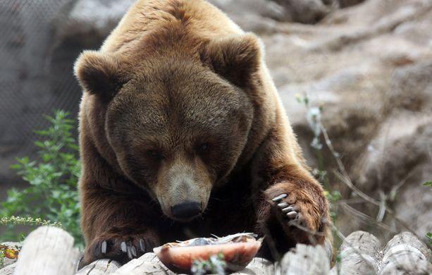 Karhun julma tappo tutkitaan. (Kuvituskuva)