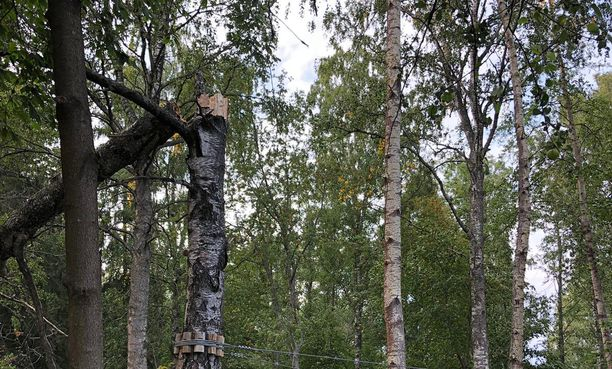 Yksi seikkailupuiston tukipuista katkesi keskeltä yhtäkkiä ilman mitään varoitusta.