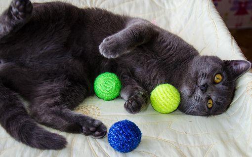 """Miksi kissat tuovat omistajilleen """"lahjoja""""?"""