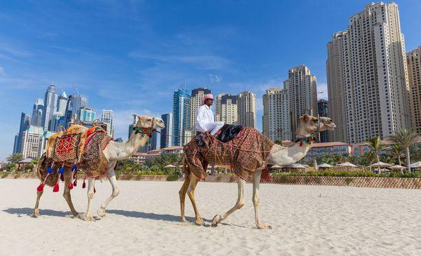 Dubain viehätys perustuu osittain beduiinielämän ja kaupunkikulttuurin kontrastiin: kaduilla saattaa nähdä niin loistoautoja kuin kameleita.