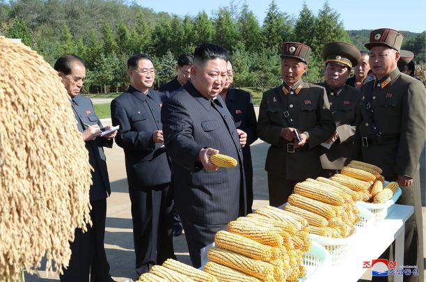 Pohjois-Korean johtaja Kim Jong-un (kesk.) vieraili farmilla No. 1116. Pohjois-Korean virallisen tiedotustoimiston kuva julkaistu 9. lokakuuta 2019.