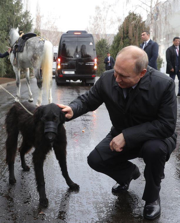 Vladimir Putinin nykyinen presidenttikausi alkoi vuonna 2012. Hän toimi Venäjän presidenttinä myös vuosina 2000-2008.