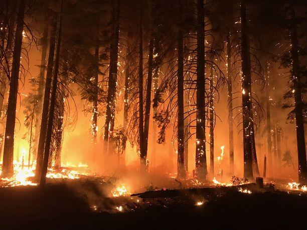 USA:n metsäviranomaisten julkaisema kuva Campin metsäpalosta.