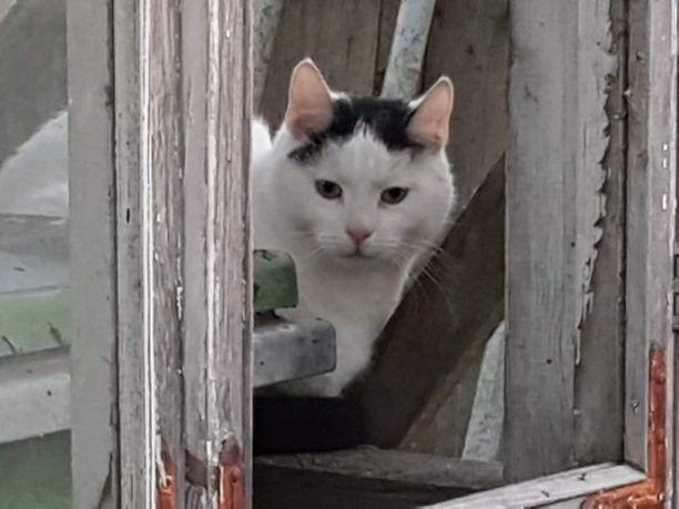 Maanantaiaamuna sama kissa tepasteli omakotitaloon.