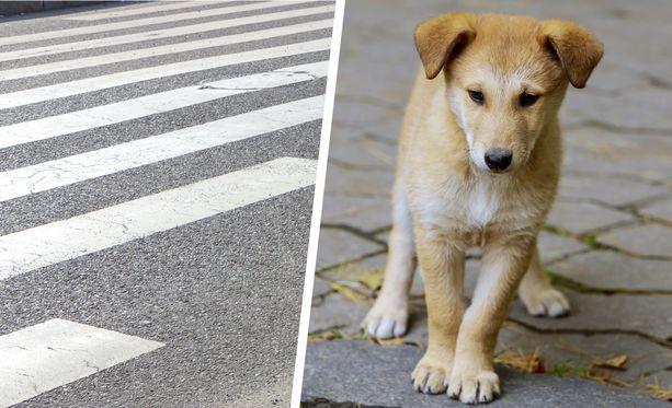 Koira on kokonsa puolesta lähempänä hellekeleillä polttavaa maan pintaa kuin ihminen.